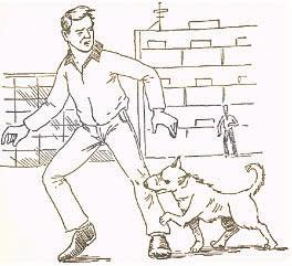 собаки без поводков в Сосновом Бору