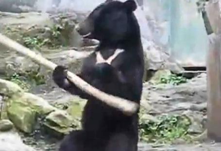 медведь кунфуист
