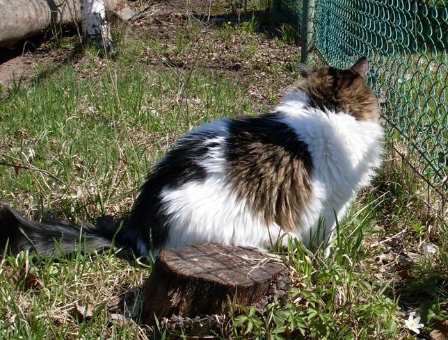 пропал кот в сосновом бору