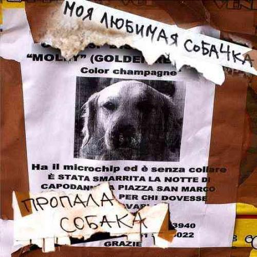 Пропала собака в Сосновом Бору