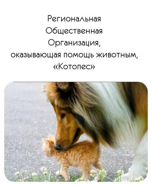 Котопес Сосновый Бор