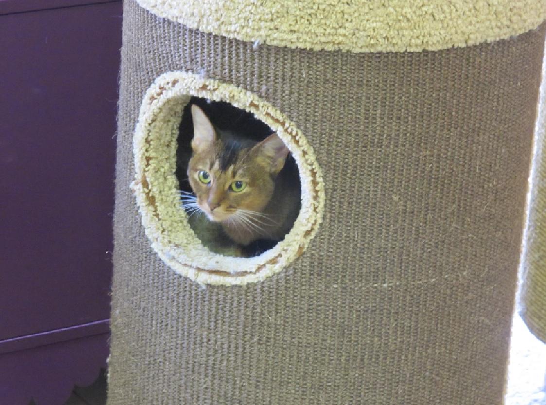Музей кошек