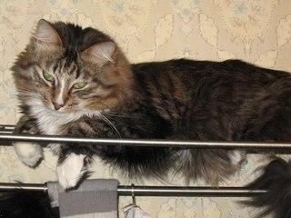 Пропали Кот и Кошка